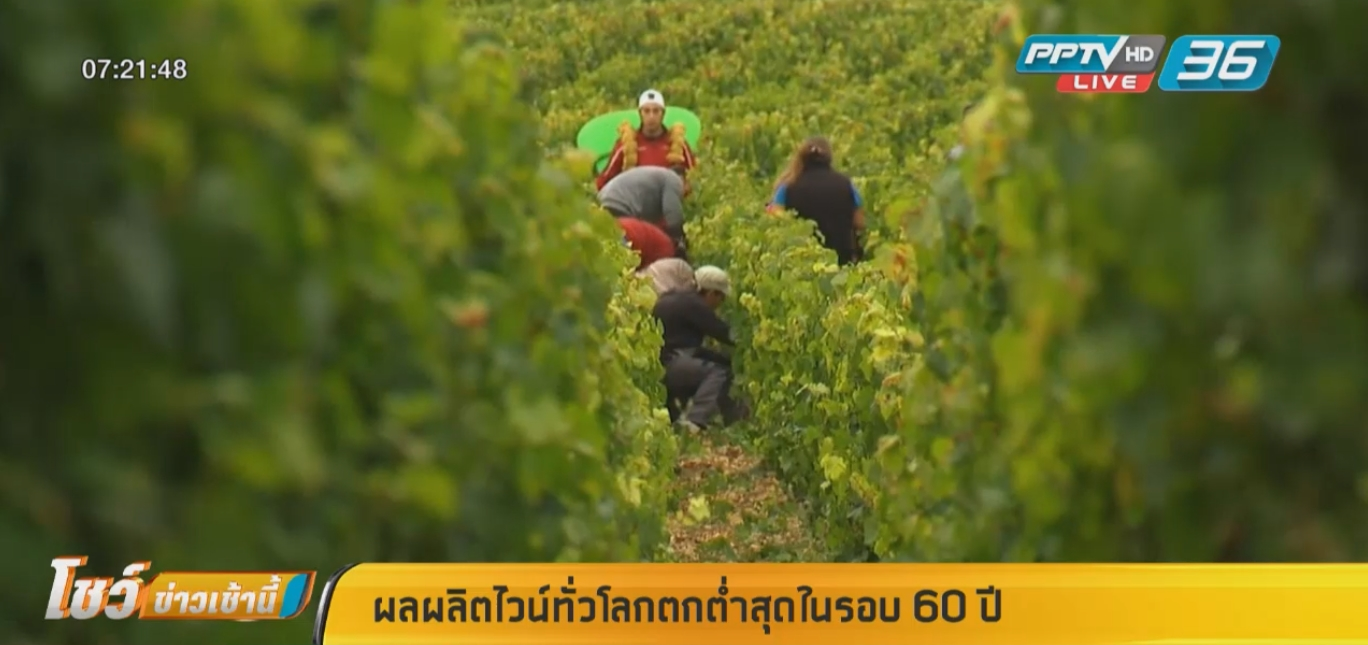 สภาพอากาศแปรปรวนทำผลผลิตไวน์ทั่วโลกต่ำสุดในรอบ 60 ปี