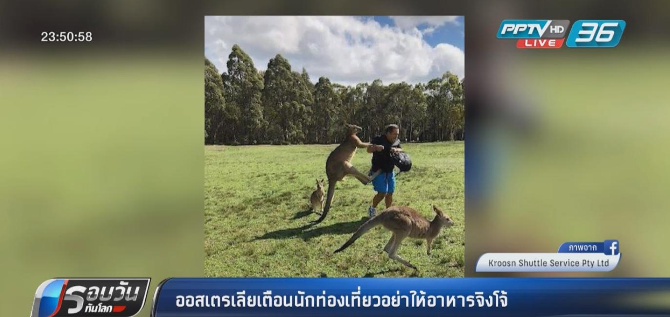 ออสเตรเลียเตือนนักท่องเที่ยวหยุดให้อาหารจิงโจ้