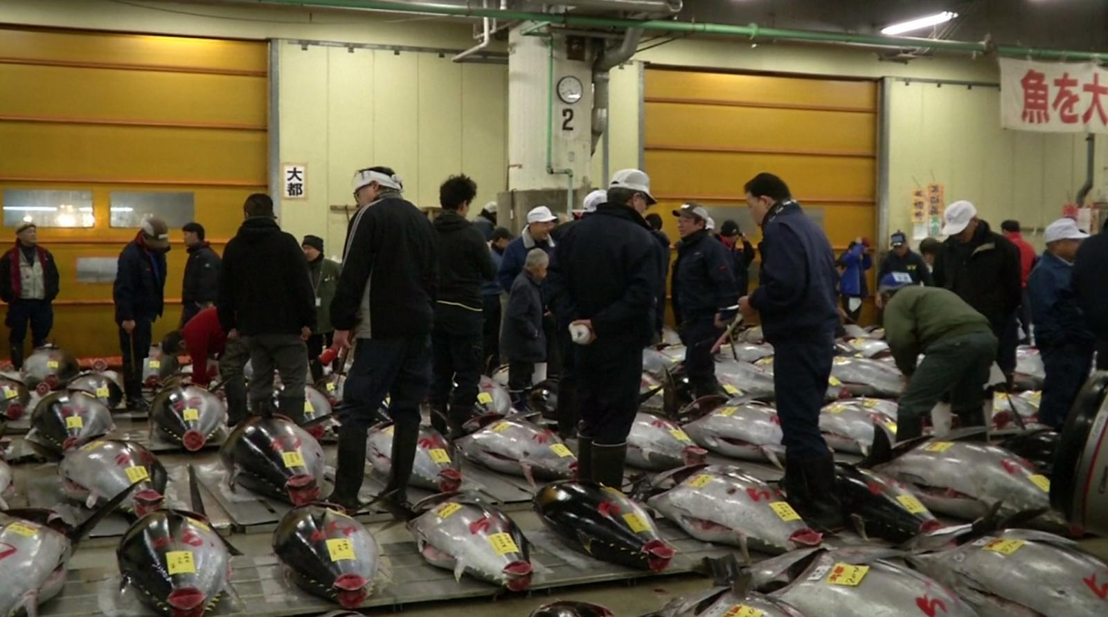 ตลาดปลาซึกิจิเปิดประมูลทูน่ายักษ์รับปีใหม่ครั้งสุดท้าย