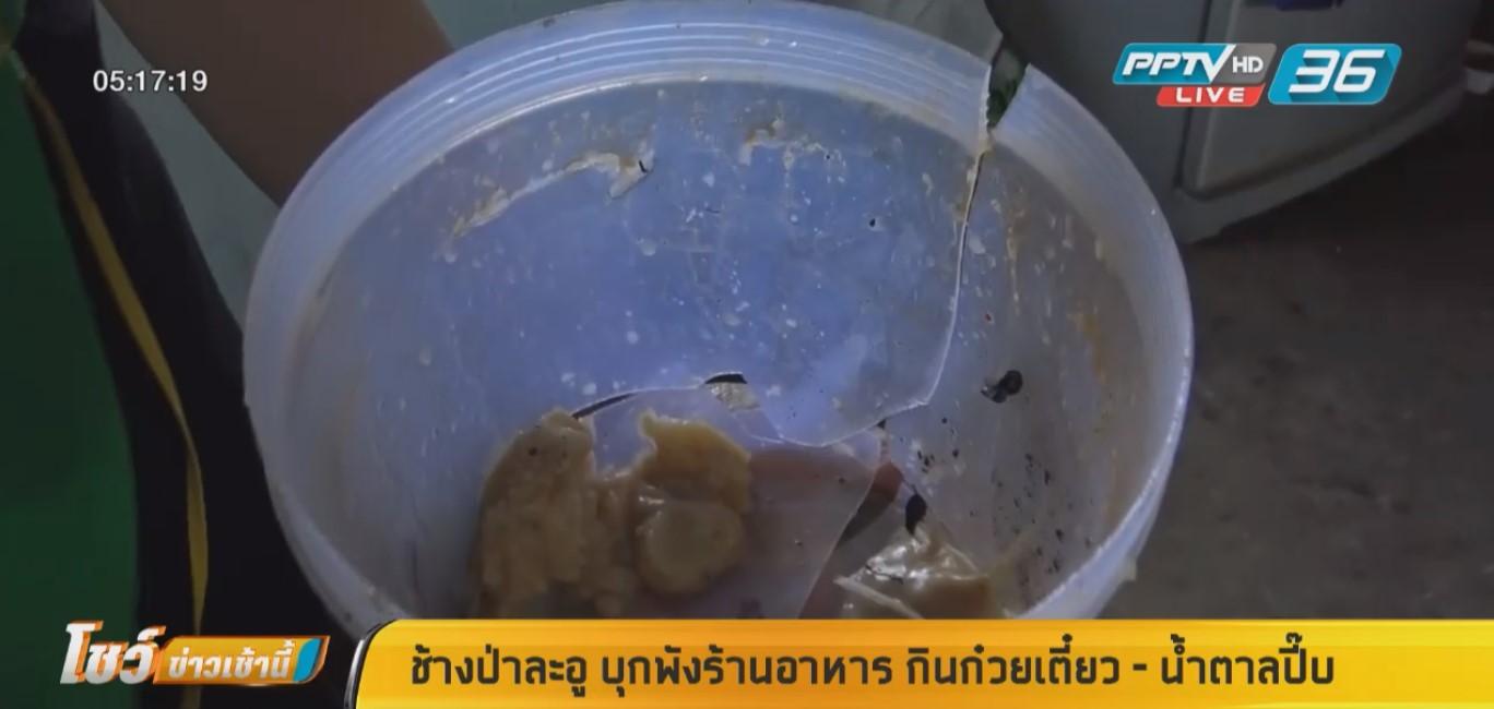 ช้างป่าละอู บุกพังร้านอาหาร กินเส้นก๋วยเตี๋ยว - น้ำตาลปี๊บ