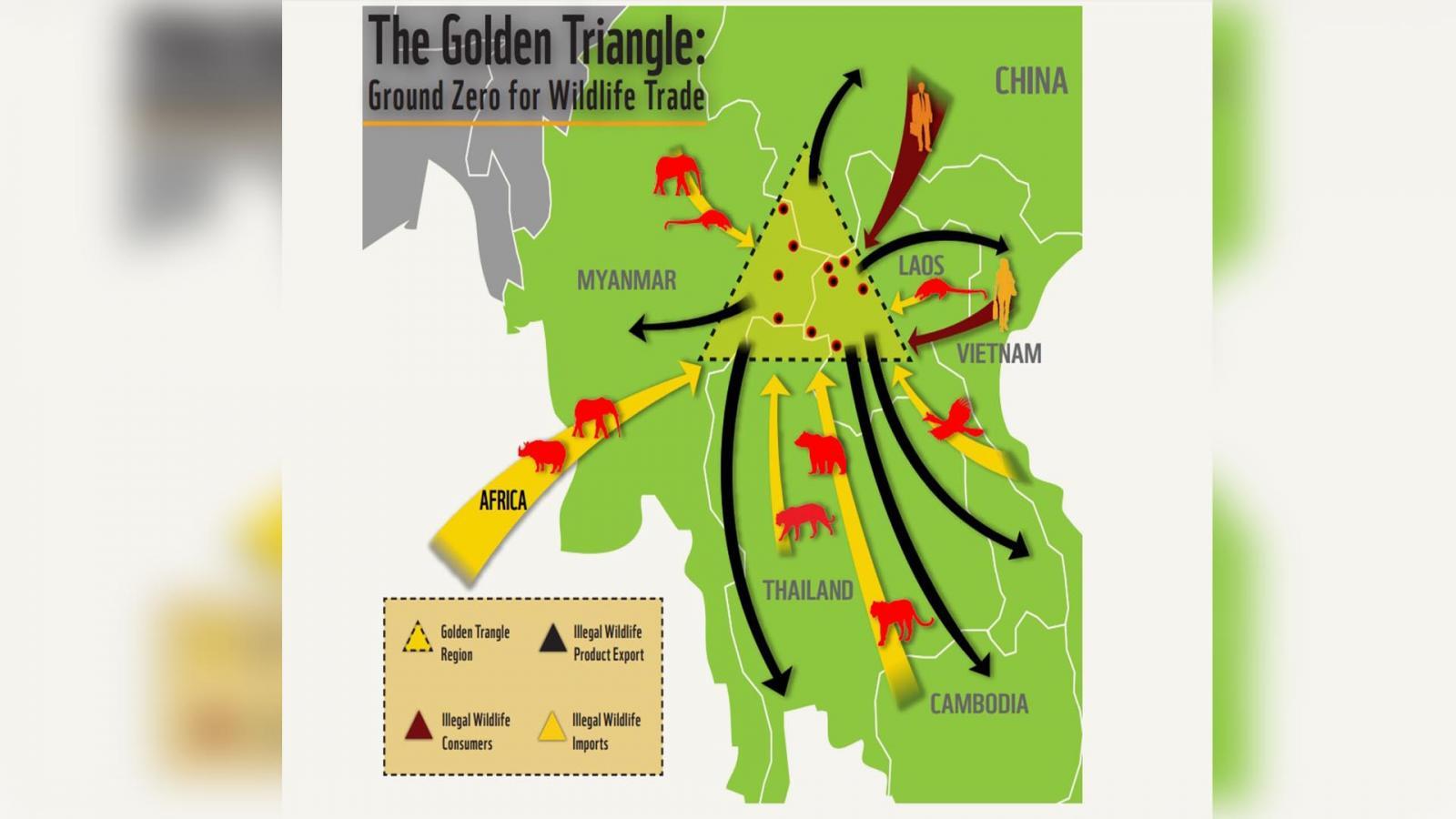 10 สัตว์ป่าที่ลักลอบซื้อขายมากที่สุด ในเขตสามเหลี่ยมทองคำ