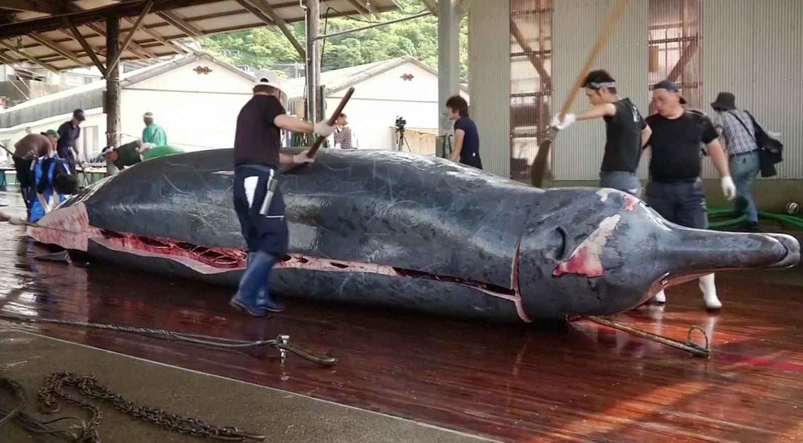 ญี่ปุ่นจัดเทศกาลอาหารจากเนื้อวาฬ