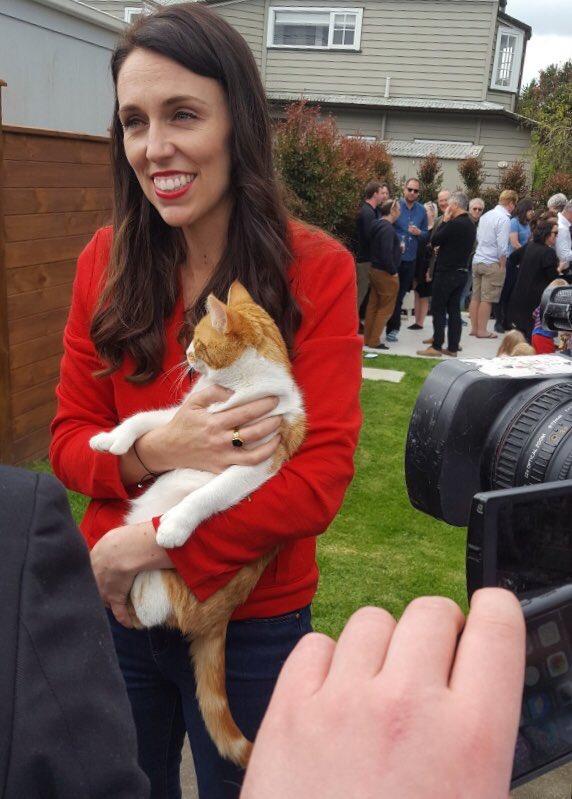 """ชาวเน็ตนิวซีแลนด์เศร้า """"แมวหมายเลขหนึ่ง"""" ถูกรถชนตาย"""