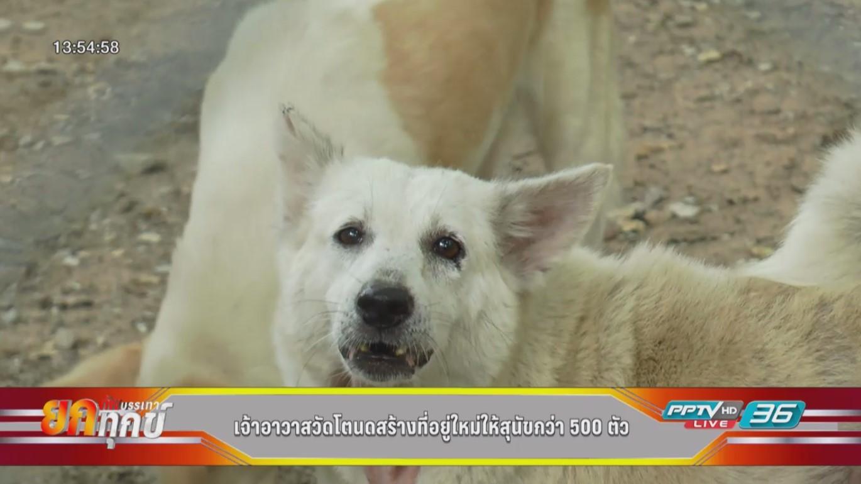 เจ้าอาวาสวัดโตนดสร้างที่อยู่ใหม่ให้สุนัขกว่า 500 ตัว