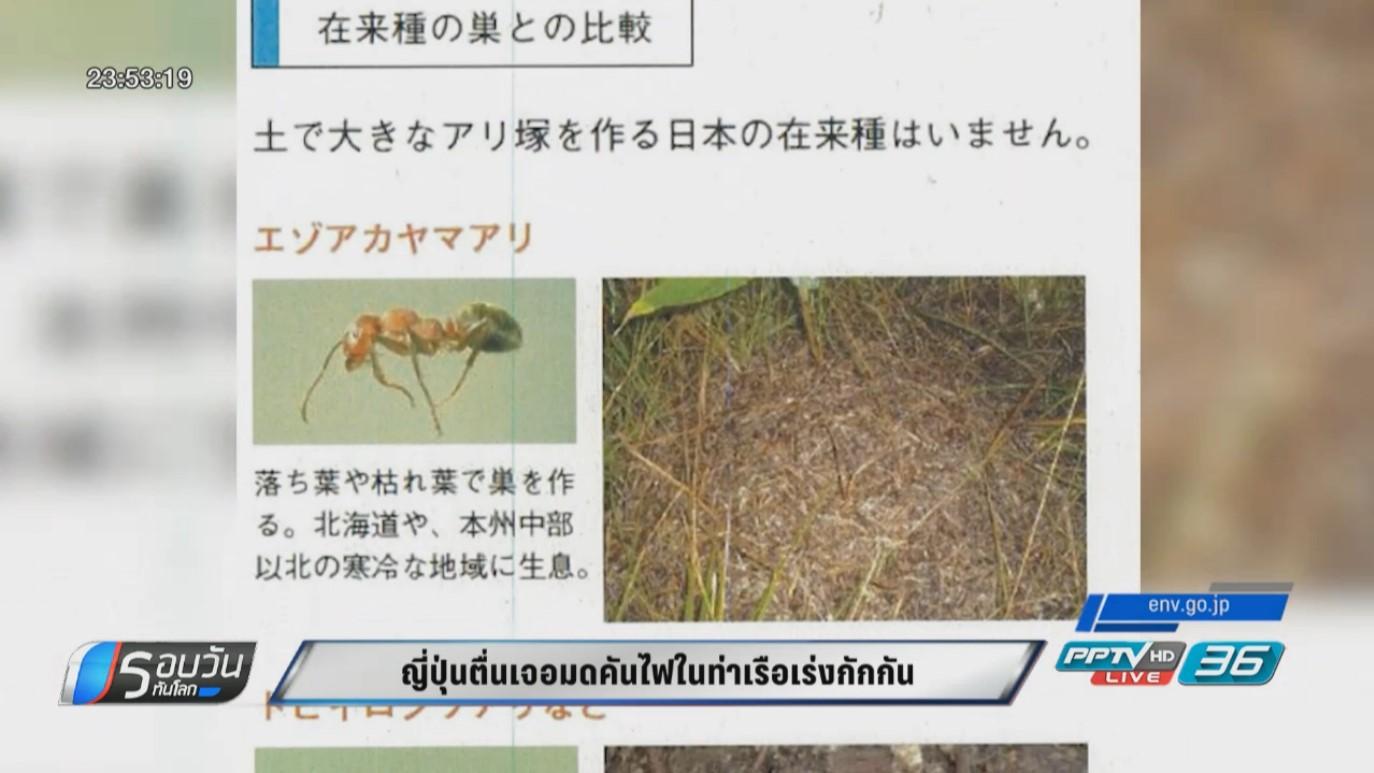 """ญี่ปุ่นเร่งกำจัด """"มดคันไฟชนิดพิษร้ายแรง"""" ในท่าเรือกลัวขยายพันธุ์จนคุมไม่อยู่"""
