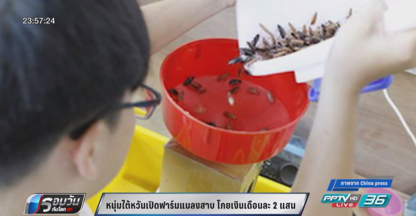 หนุ่มไต้หวันเปิดฟาร์มแมลงสาบ โกยรายได้เดือนละกว่า 2 แสน