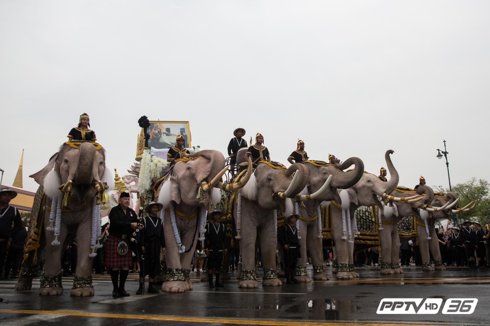 มูลนิธิพระคชบาลนำช้าง 11 เชือกเข้าถวายอาลัย (คลิป)