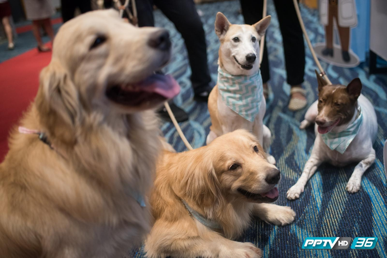 """เรียกน้ำย่อย.. """"คนรักสัตว์"""" ก่อนถึง """"Pet Expo Thailand 2016"""""""