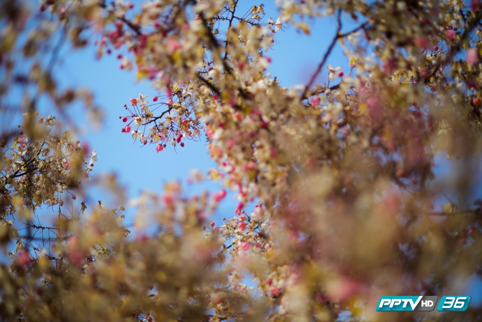 """สีสัน """"ดอกไม้"""" หลากสายพันธุ์ เติมความสดใสหน้าร้อน"""