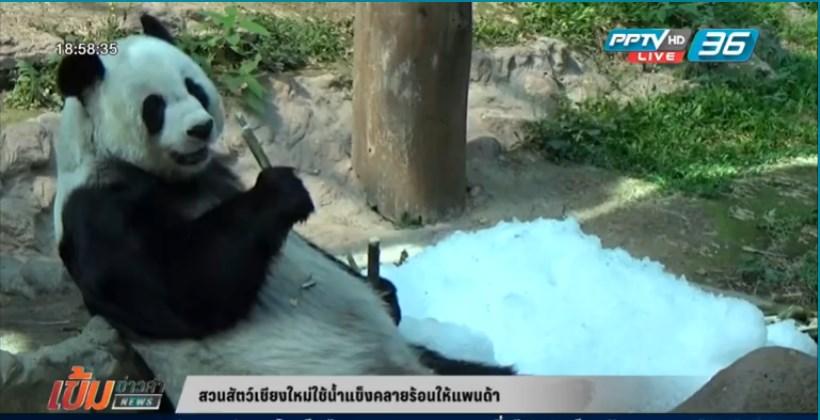 สวนสัตว์เชียงใหม่ใช้น้ำแข็งคลายร้อนให้แพนด้า