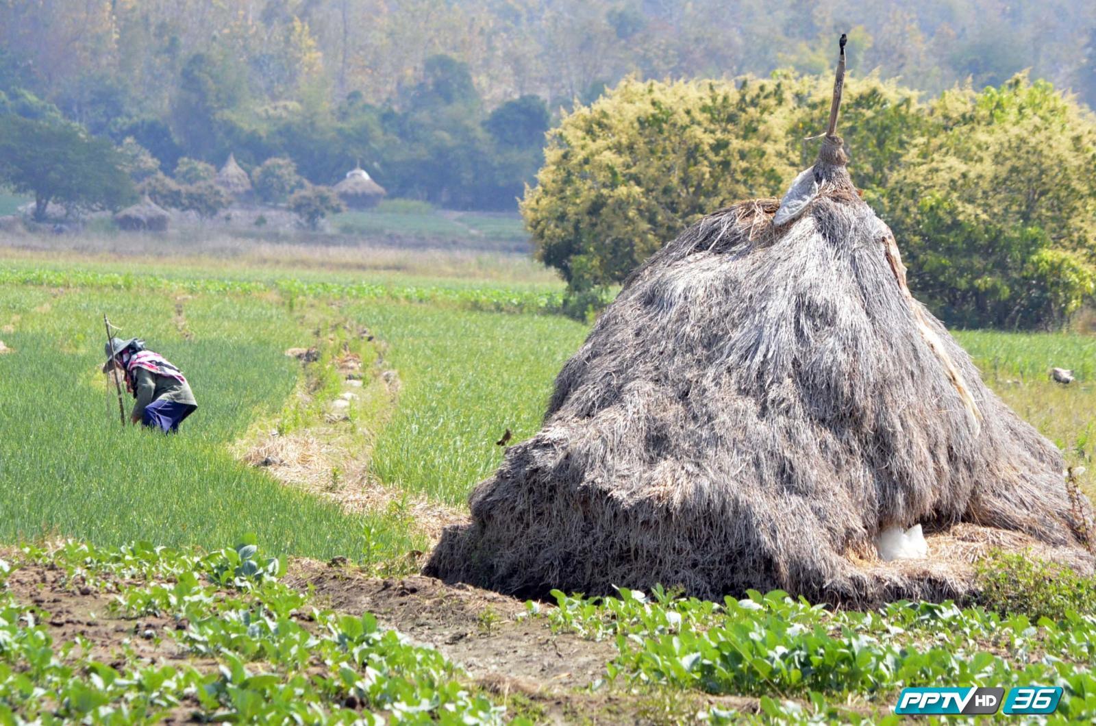 เกษตรกรไทยเสี่ยงอันตรายพิษสารเคมี ยอดผู้ป่วยเพิ่ม 4 เท่าตัว !!!