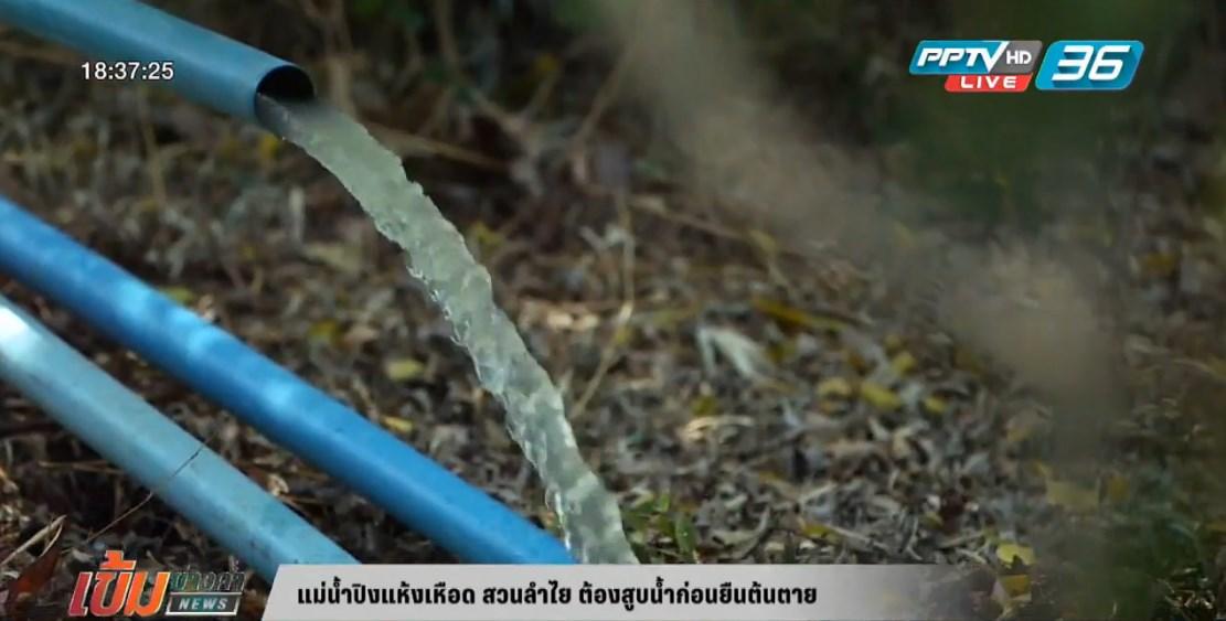 แม่ปิงแห้งเหือด สวนลำไย ต้องสูบน้ำก่อนยืนต้นตาย (คลิป)