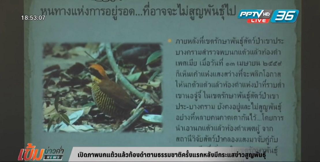 เปิดภาพนกแต้วแล้วท้องดำตามธรรมชาติครั้งแรกหลังมีกระแสข่าวสูญพันธุ์