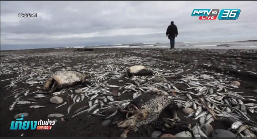 พบวาฬ 24 ตัว เกยตื้นตายเต็มหาดในเม็กซิโก