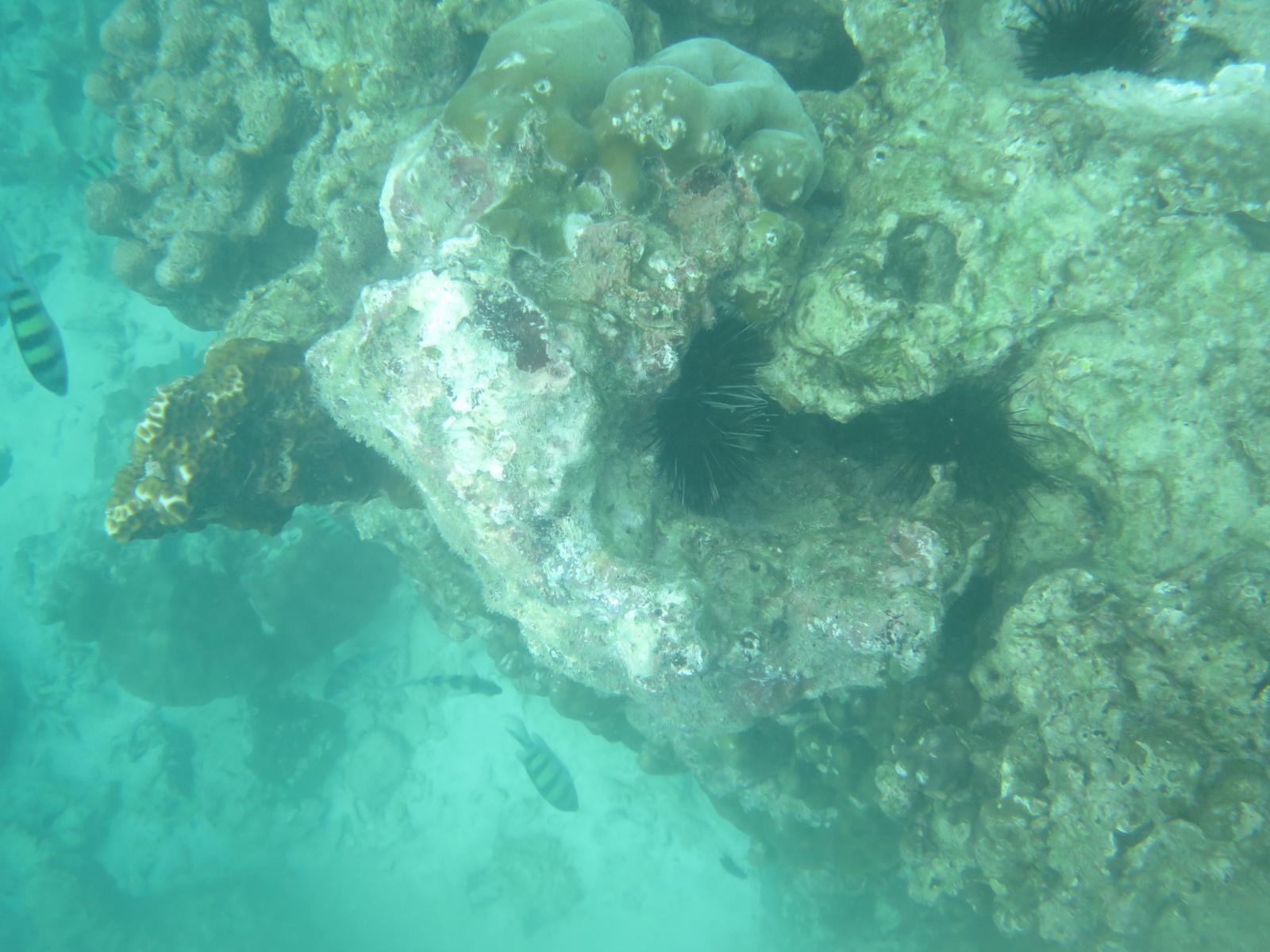 แม้เข้าสู่ฤดูฝน แต่ 2 เดือนหลังจากนี้ คือระยะที่ปะการังฟอกขาวอ่อนแอที่สุด
