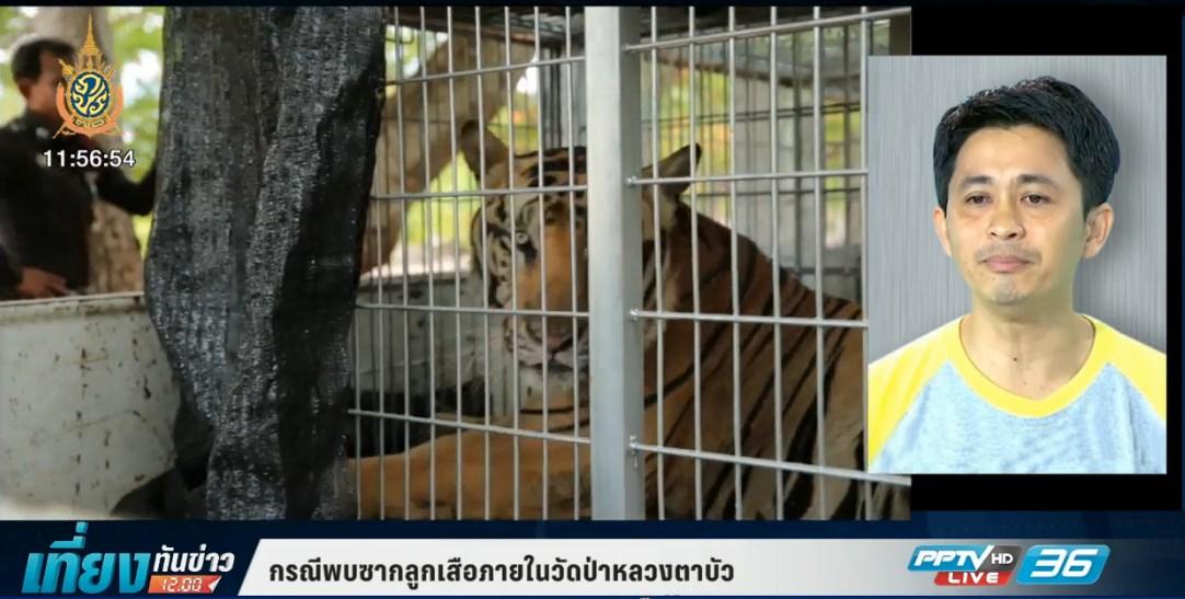 ข้อสังเกต เลขามูลนิธิสืบฯ หลังพบซากลูกเสือแช่แข็ง  (คลิป)
