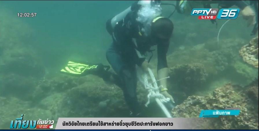 นักวิจัยไทยเตรียมใช้สาหร่ายจิ๋วชุบชีวิตปะการังฟอกขาว