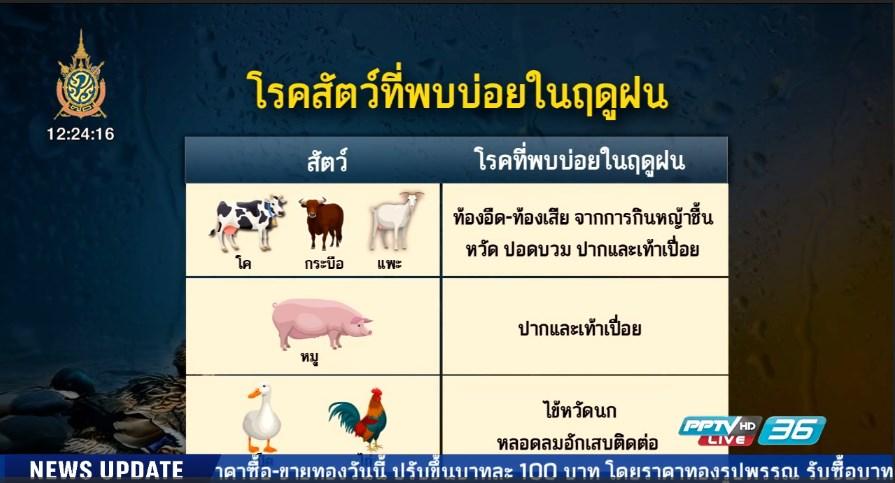 เตือนเกษตรกรระวังโรคระบาดสัตว์หน้าฝน