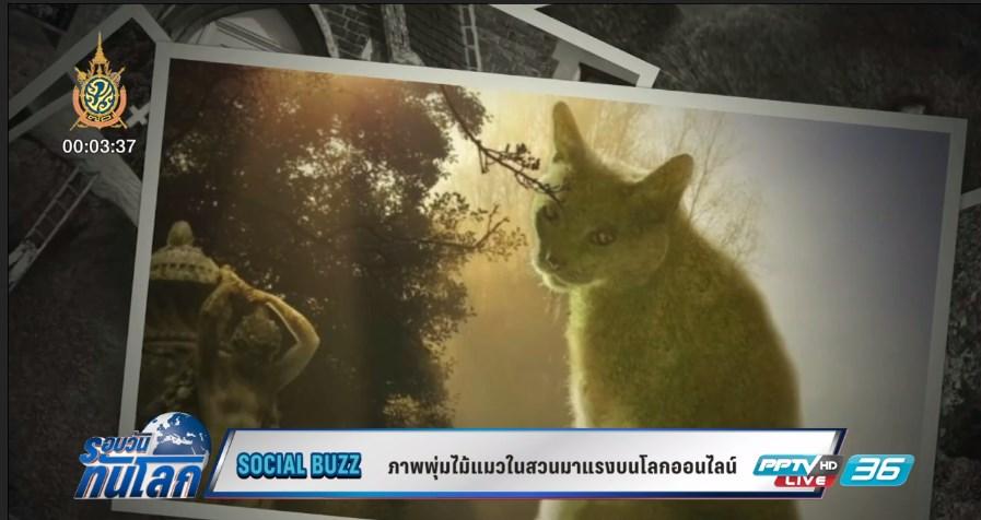 Social Buzz ภาพพุ่มไม้แมวในสวนอังกฤษมาแรงในโลกออนไลน์ (คลิป)