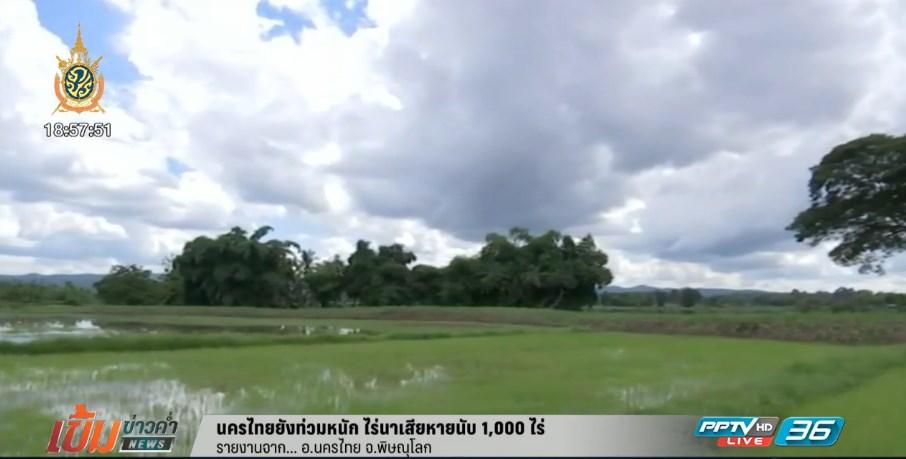นครไทยยังท่วมหนัก ไร่นาเสียหายนับ 1,000 ไร่ (คลิป)