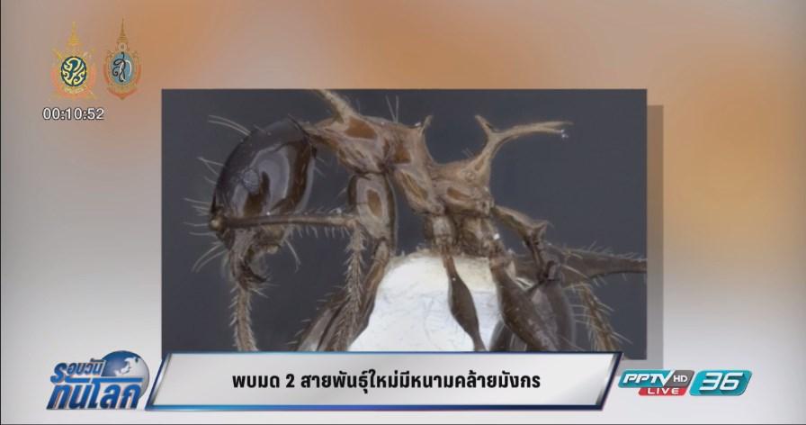 พบมด 2 สายพันธุ์ใหม่มีหนามคล้ายมังกร