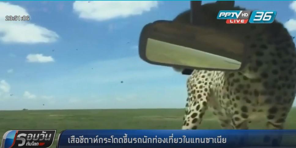 """""""เสือชีตาห์""""กระโดดขึ้นรถนักท่องเที่ยวในแทนซาเนีย"""