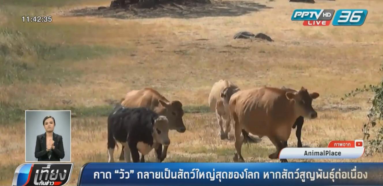 """นักวิทย์คาด""""วัว"""" กลายเป็นสัตว์ใหญ่สุดของโลกหากสัตว์อื่นสูญพันธุ์"""