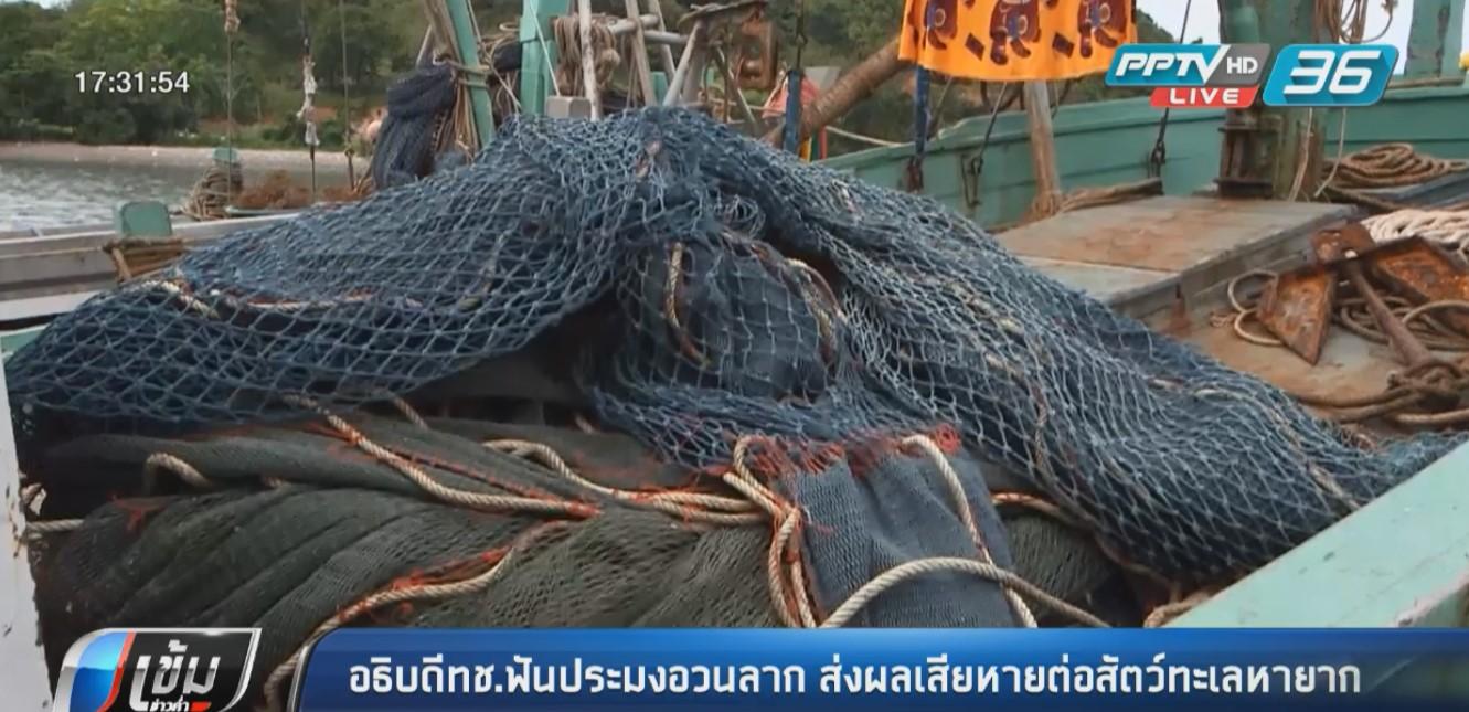 อธิบดีทช.ชี้ ประมงอวนลาก ส่งผลต่อสัตว์ทะเลหายาก