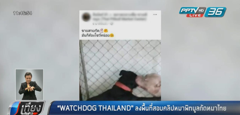 """WATCHDOG THAILAND"" ลงพื้นที่สอบคลิป ""หมาพิทบูล""กัดหมาไทย"