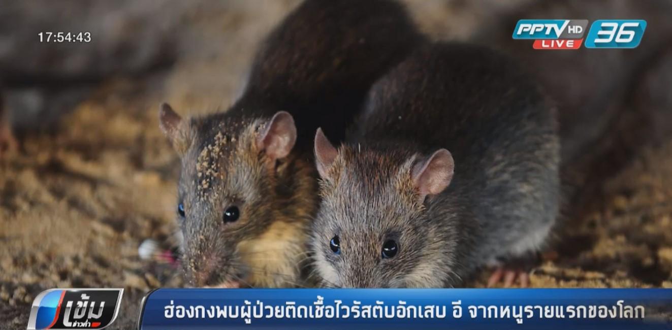ฮ่องกง พบ ผู้ป่วยติดเชื้อไวรัสตับอักเสบ อี จากหนูรายแรกของโลก