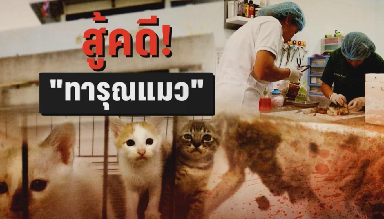 """""""คนรักสัตว์"""" มั่นใจมีหลักฐานเอาผิด """"ดีเจสาว"""" ทารุณกรรมแมว"""