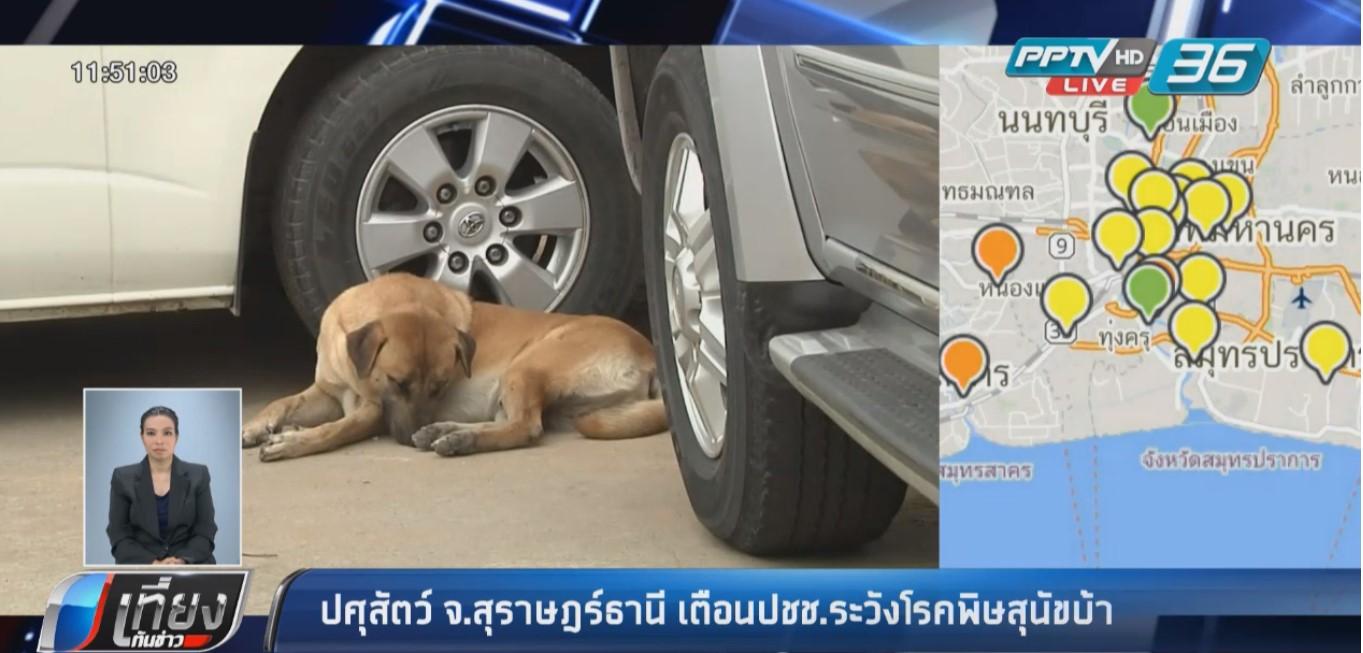 ปศุสัตว์สุราษฎร์ธานี เตือนประชาชน ระวังโรคพิษสุนัขบ้าใกล้ช่วงฤดูร้อน