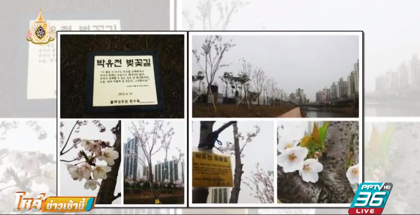 """ถอดชื่อ """"ปาร์ค ยูชอน"""" จากถนนซากุระเกาหลีใต้"""