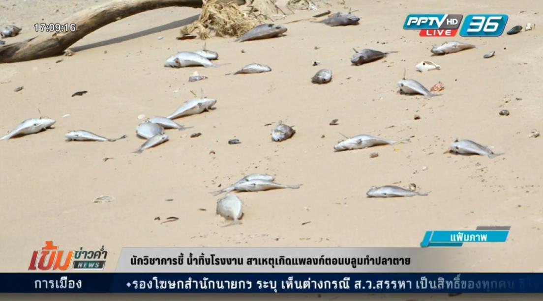นักวิชาการ ระบุแพลงก์ตอนบลูมเกิดจากน้ำทิ้งโรงงาน