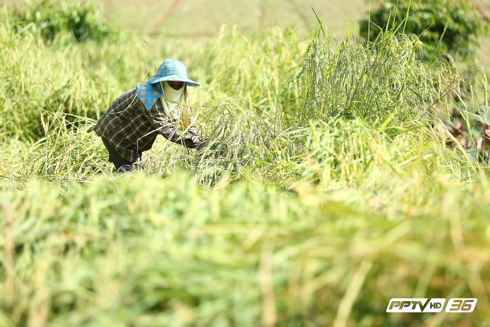 พระราชดำริพลิกดินแล้ง สู่ผืนป่าสีเขียวอันอุดมสมบูรณ์(คลิป)