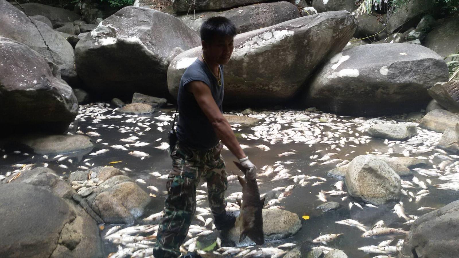 เร่งประสานประมงอำเภอ ตรวจสอบสาเหตุปลาพลวงตาย