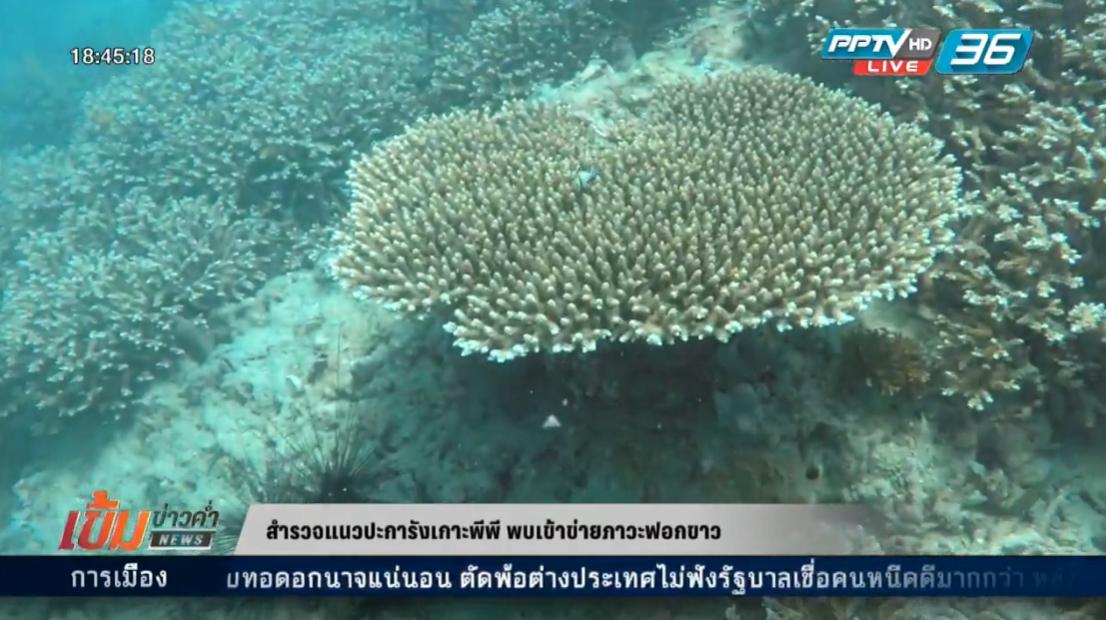"""""""ปะการังฟอกขาว"""" สัญญาณอันตราย สัตว์น้ำถึงมนุษย์"""