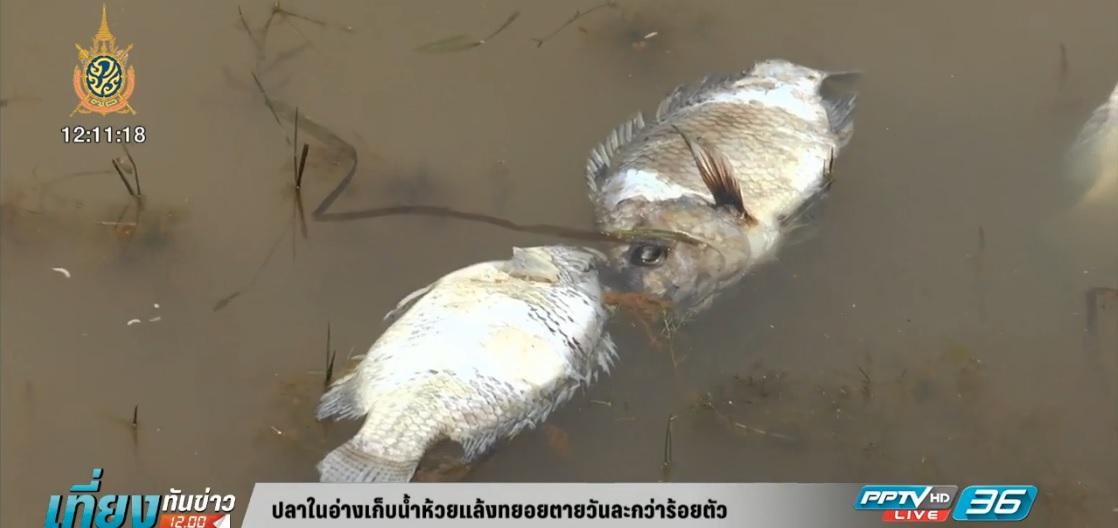 ปลาในอ่างเก็บน้ำห้วยแล้งทยอยตายวันละกว่าร้อยตัว