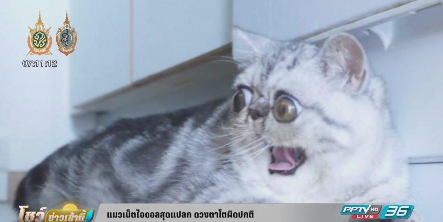 แมวเน็ตไอดอลสุดแปลก ดวงตาโตผิดปกติ (คลิป)