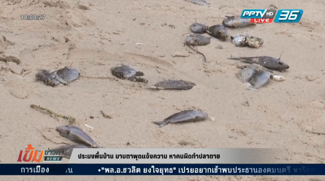 ประมงพื้นบ้านมาบตาพุด แจ้งความหาคนผิดทำปลาตาย