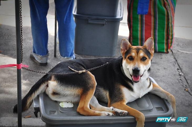 """ชี้สาเหตุรายงาน """"โรคพิษสุนัขบ้า"""" คลาดเคลื่อน เกิดจากการตรวจวินิจฉัยไม่ถึงที่สุด"""