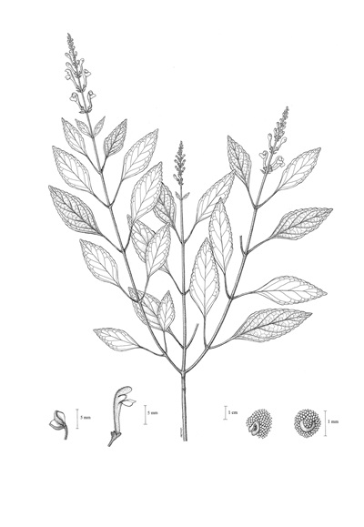 นักพฤกษศาสตร์ สำรวจพบ 8 พืชพันธุ์ชนิดใหม่ของโลกในไทย