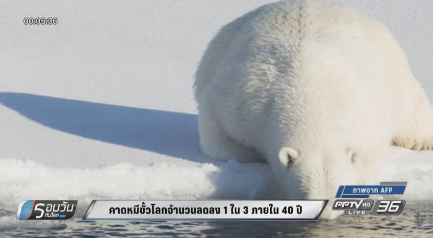 คาดหมีขั้วโลกจำนวนลดลง 1 ใน 3 ภายใน 40 ปี