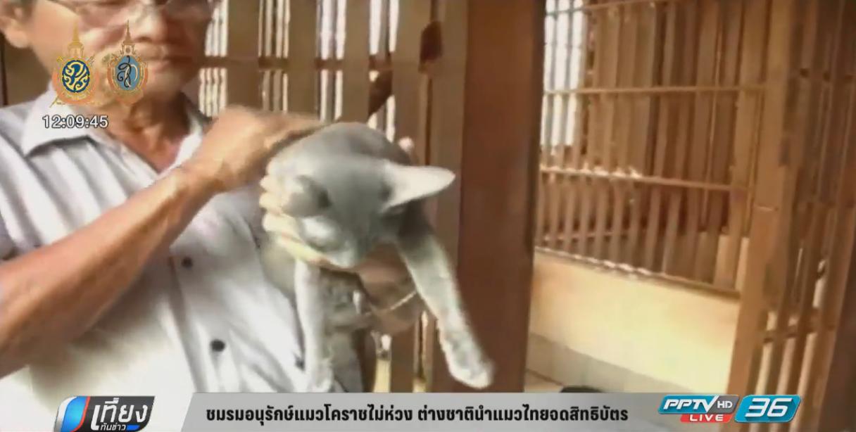 ชมรมอนุรักษ์แมวโคราชไม่ห่วง ต่างชาตินำแมวไทยจดสิทธิบัตร
