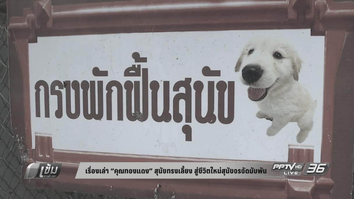 """เรื่องเล่า """"คุณทองแดง"""" สุนัขทรงเลี้ยง  สู่ชีวิตใหม่สุนัขจรจัดนับพัน (คลิป)"""