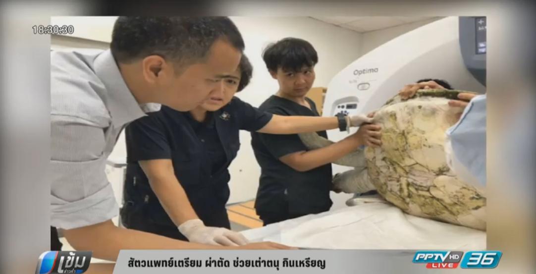 สัตวแพทย์เตรียม ผ่าตัด ช่วยเต่าตนุ กินเหรียญ