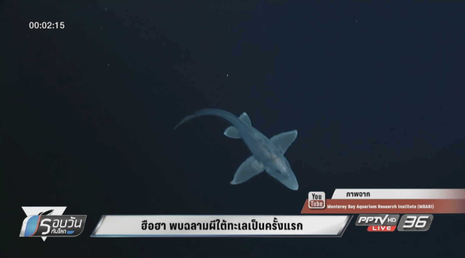 ฮือฮา พบฉลามผีใต้ทะเลเป็นครั้งแรก