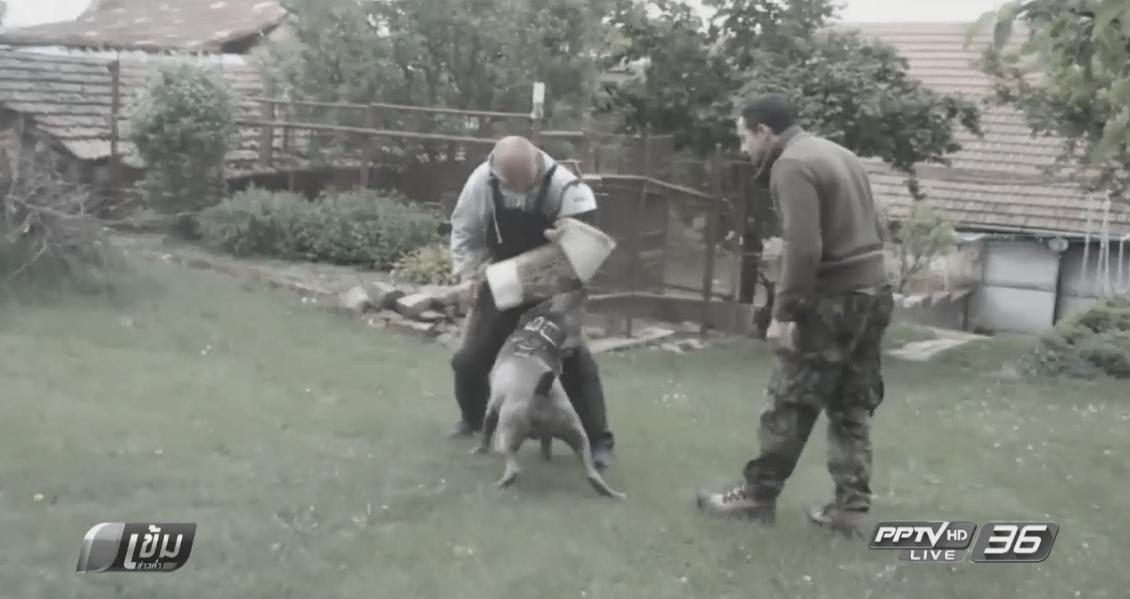 """""""คาร์โรลล์"""" ซื้อสุนัขพันธุ์ดุ พร้อมส่งฝึก หวังคุ้มกันความปลอดภัย"""