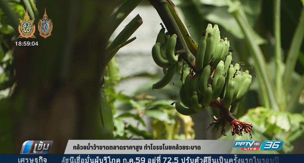 กล้วยน้ำว้าขาดตลาดราคาสูง ทำโจรขโมยกล้วยระบาด (คลิป)