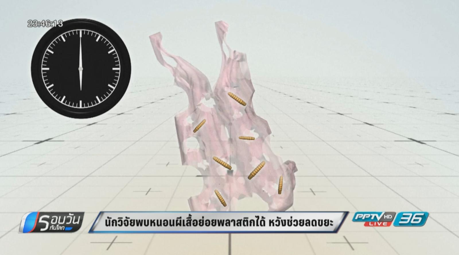 นักวิจัยพบหนอนผีเสื้อย่อยพลาสติกได้ หวังลดปัญหาขยะ